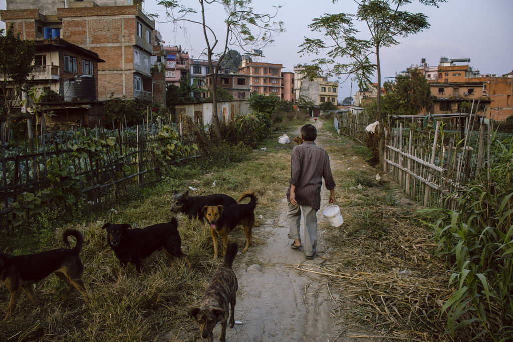 A man and a pack of stray dogs in Kathmandu, Nepal, 2015